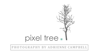 pixel tree photography logo